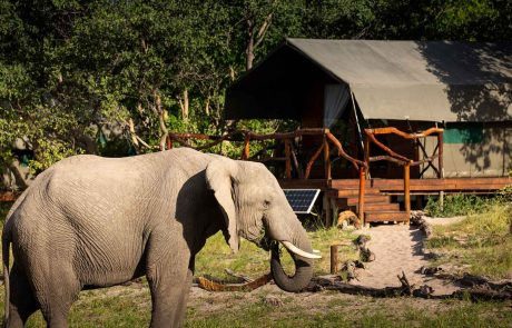 Savuti-elephants-meru-tent - Botswana